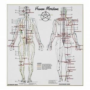 Human Meridians  U0026 Pressure Point Chart Poster