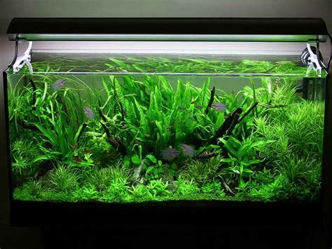 asian jungle aquarium decoration themes planted aquarium aquarium decorations