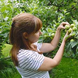 Apfelbaum Schneiden Wann : apfelbaum schneiden tipps f r jede baumgr e obstb ume schneiden apfelb ume schneiden garten ~ Watch28wear.com Haus und Dekorationen
