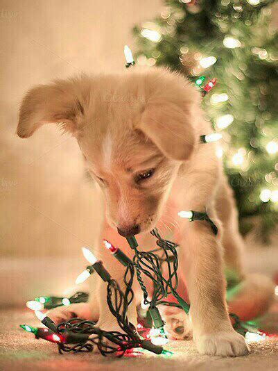 Golden Retriever Wallpaper Aesthetic Lock Screen Puppies by Fav Adorable Lights Cold Quote