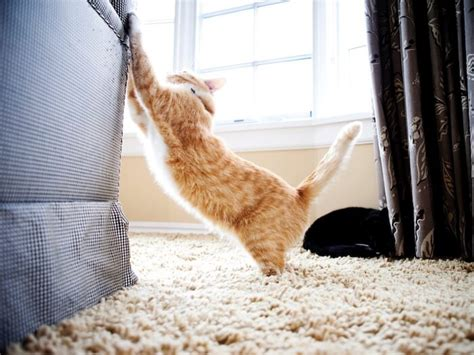 Stop Cat From Scratching Furniture by How To Stop Cats Scratching Furniture