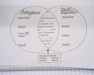 Cellular Respiration Guided Reading Answer Key