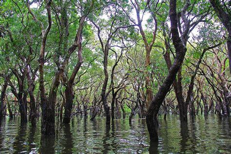 Mehr Bäume Für Den Klimaschutz? Energiezukunfteu