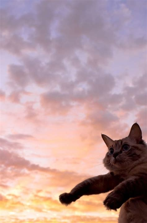 45 and cat wallpapers aesthetic iphone