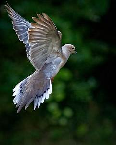 Pin on Bird Art/Photos