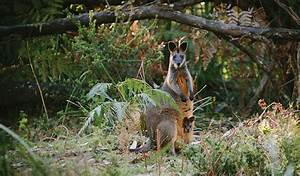 Australian plants and animals | NSW National Parks