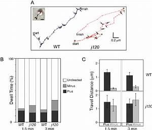 Analysis Of Individual Melanosome Movements During