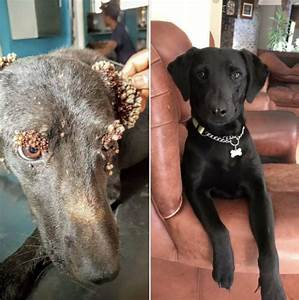 Dog covered in strange bumps is saved holidogtimes for Dog covered in bumps