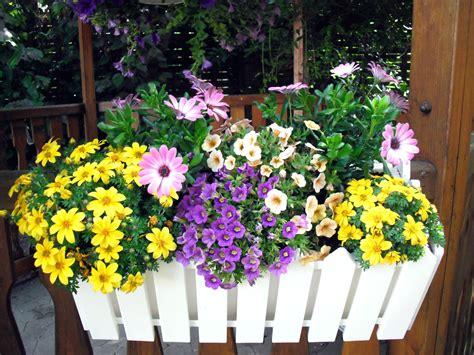 Den Balkon Mit Passenden Pflanzen Und Blumen Im September Beleben by Blumen Schattiger Standort Welche Blumen Im Schatten