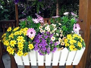 Pflanzen Für Balkon : pflanzen pflanzenklick ~ Sanjose-hotels-ca.com Haus und Dekorationen