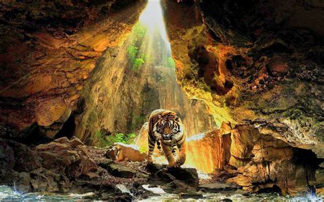 tiger, Cave, Sunlight, Nature Wallpapers HD / Desktop and ...