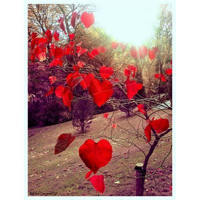 heart leaves - Slow Family