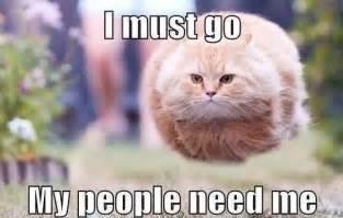 cat jokes for cat joke on