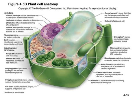 Labeled Plant Cell Functions Molecular Biology