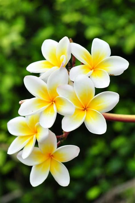 Image result for flowers images