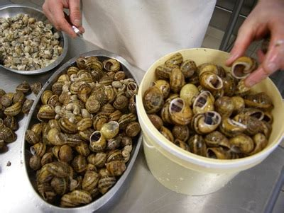 comment cuisiner les escargots comment sont fabriqués nos escargots l 39 escargot des chazeaux