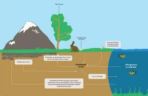 phosphorus cycle earth science quiz visionlearning