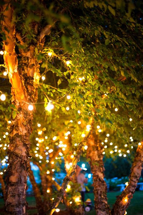 twinkle light tree twinkle lights photography for inspiration photography