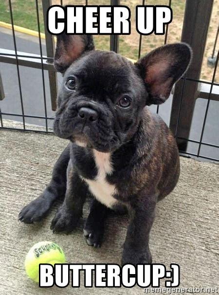 French Bulldog Meme - cheer up buttercup french bulldog feel better meme generator