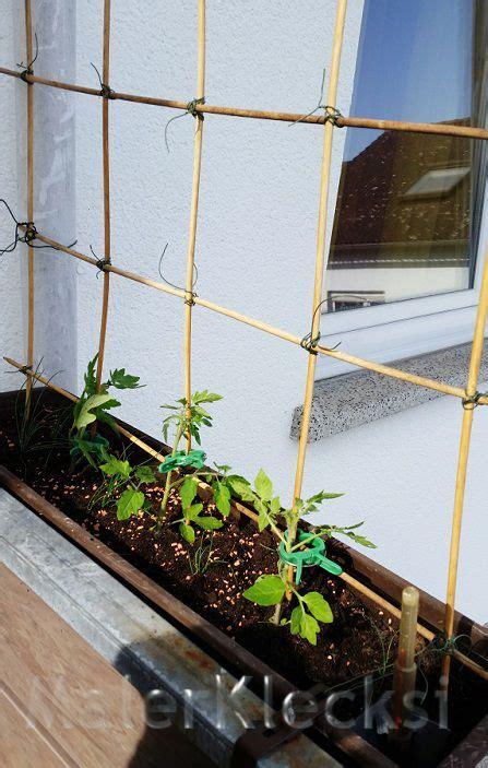 Tomaten Im Blumenkasten by Ein Einfaches Spalier F 252 R Tomaten Im Blumenkasten