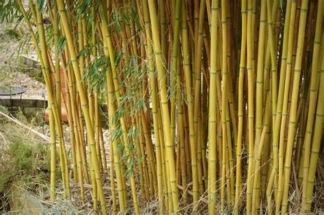 Garden To Grow Going Green Mill by It S Not Work It S Gardening Let S Talk Bamboo Survival