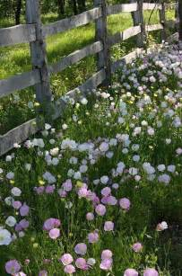 Country Flowers along Fence