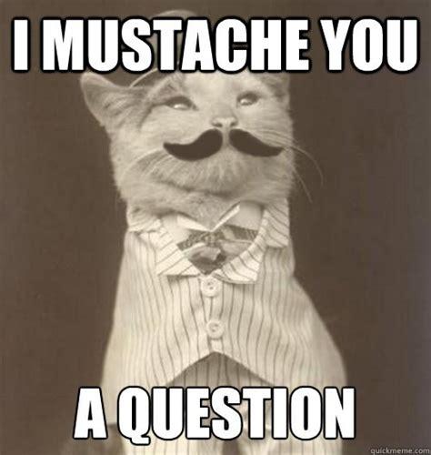 Question Meme - original business cat i mustache you a question gentlemint