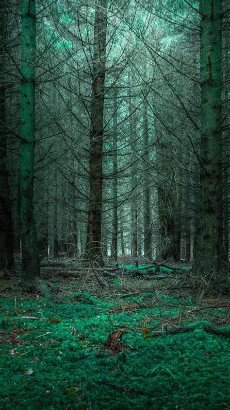 You can also upload and share your favorite dark forest wallpapers. Wallpaper #nature# mysterious forest   forest home   Nature iphone wallpaper, Nature wallpaper ...