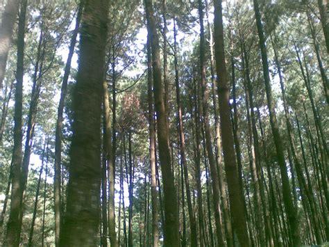 taman wisata gunung pancar honey bee