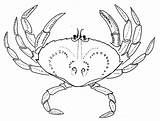 Crab Trap Drawing Pacific Dungeness Region Crabe Getdrawings Ifmp sketch template