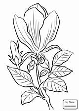 Magnolia Coloring Pages Tree Tattoo Drawing Watercolor Printable Awesome Flower Getcolorings Getdrawings Flo sketch template