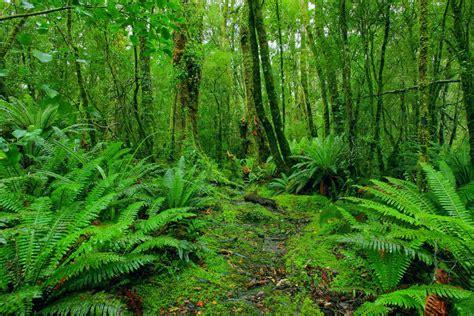 tanaman obat survival hutan infografis