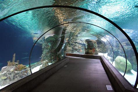 nebraska zoo underwater aplicaciones tunnel henry doorly tunnels aquarium shark principales acrilico