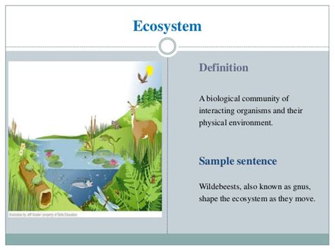 Ecosystem Definition Biology Esp T Kit On Fishery