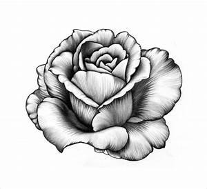 Beautiful Pencil Drawn Flowers | www.pixshark.com - Images ...