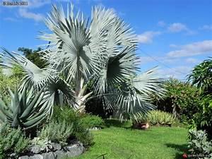 Palmier De Jardin : palmier pour jardin ~ Nature-et-papiers.com Idées de Décoration