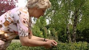 Spritzmittel Gegen Buchsbaumzünsler : der buchsbaumz nsler ist wieder da burgenland ~ Watch28wear.com Haus und Dekorationen