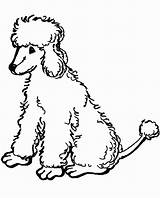 Poodle Coloring Pages Toy Printable Poodles Dog Template French Clip Google Sheets Templates Getdrawings Popular Getcolorings sketch template
