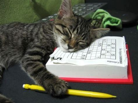 Tiring Sudoku  Poor Cat Felt Asleep While Solving Too