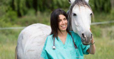 homoeopathie fuer pferde formica rufa bei arthritis und