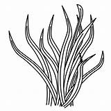 Coloring Pages Plants Sea Plant Drawing Clipart Grass Ocean Printable Template Drawings Underwater Coral Sheets Clip Cliparts Library Under Draw sketch template