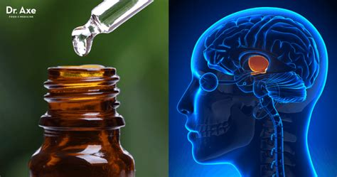 6 Natural Ways to Boost Hypothalamus Function - Dr. Axe