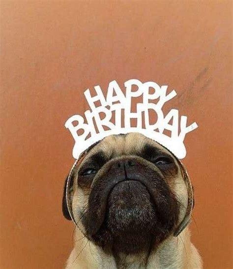 Happy Birthday Pug Meme - 25 best ideas about happy birthday pug on pinterest birthday greetings ryan gosling birthday