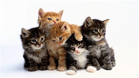 Kādi cilvēki par savu mīluli parasti izvēlas kaķi ...