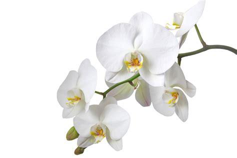 Exposition Internationale D'orchidées à L'abbaye De Vaucelles