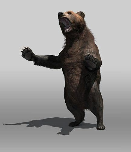 asset grizzly bear cgtrader