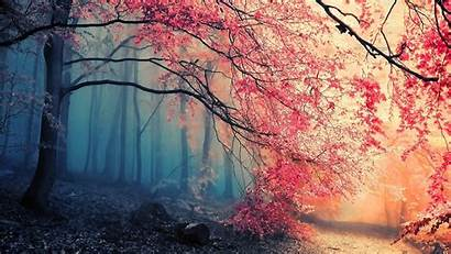 Simple Nature Colorful Trees Backgrounds Wallpapers Desktop