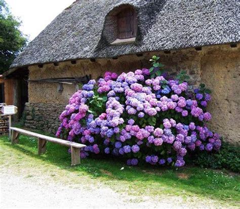 hydrangea garden design 20 ideas for outdoor home decorating with hydrangeas adding exotic feel to garden design