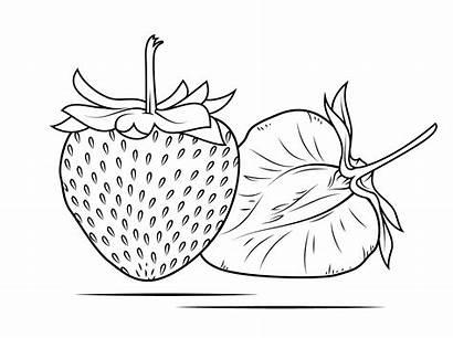 Strawberry Coloring Buah Gambar Mewarnai Sketsa Colorare