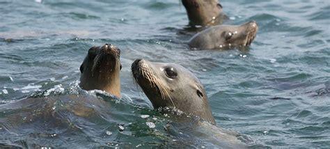 Conserving Marine Life Along Catalinas Coast
